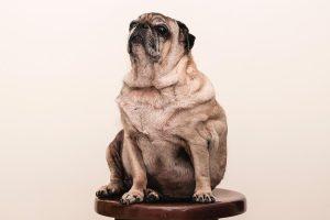 脂肪吸引で脂肪細胞を除去!リバウンドを防いで効果が続く理由とは?